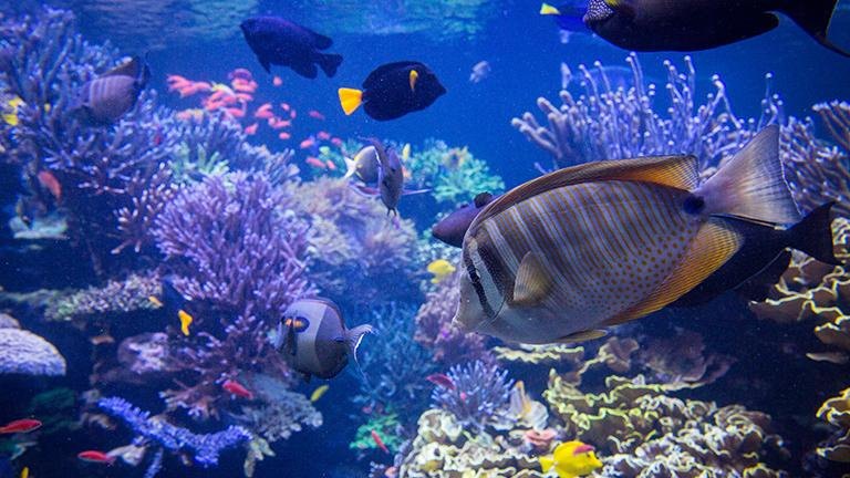 Tourist attractions, local-guide, Oceanarium