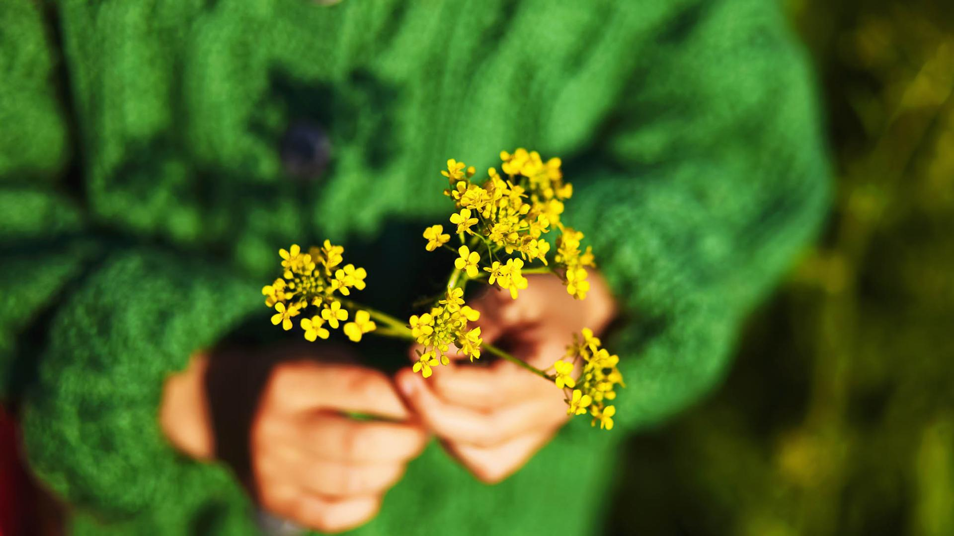 The flower yellow in hands